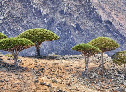 Magiczne drzewa – #czerwcowapodróżonline